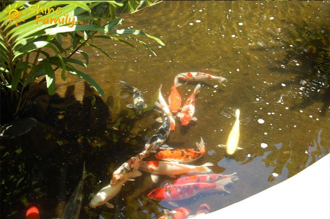 Прудик с рыбками отвлекает сознание от длительного перелета