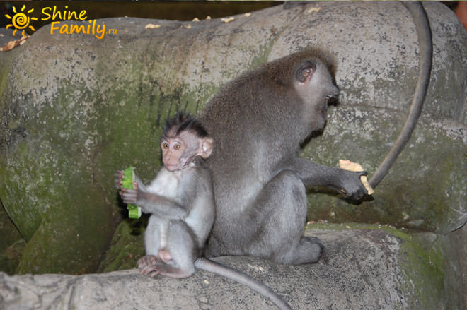 monkey_forest