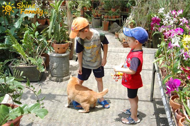 на входе в ботанический сад Убуда нас встретил большой кот