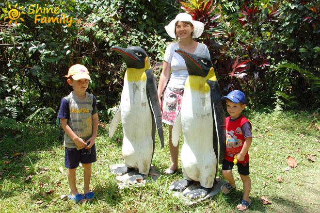 пингвины в тропиках