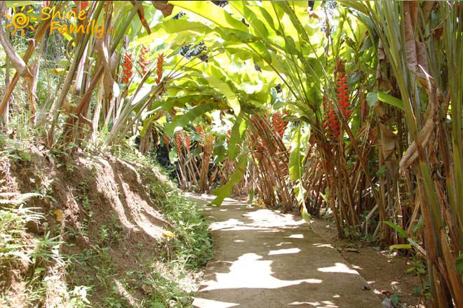 аллея в тропиках