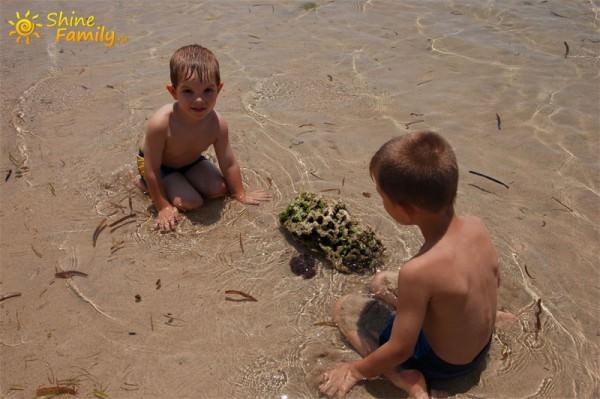Дети нашли морского ежа