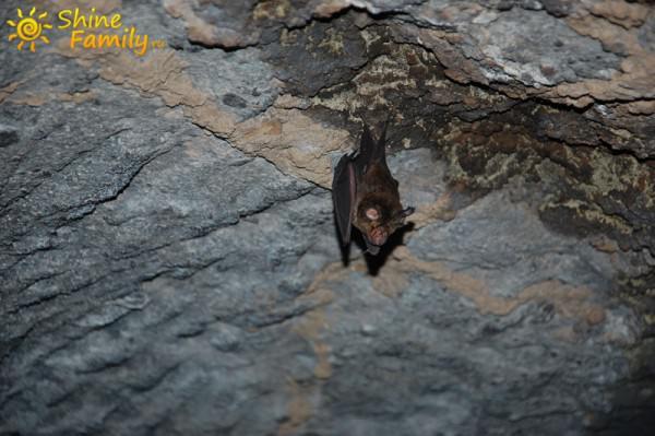 Летучая мышка встретила нас в глубине пещеры