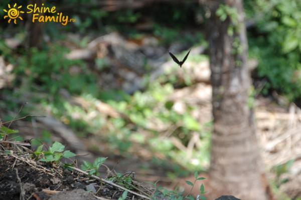 мимо бабочка пролетела