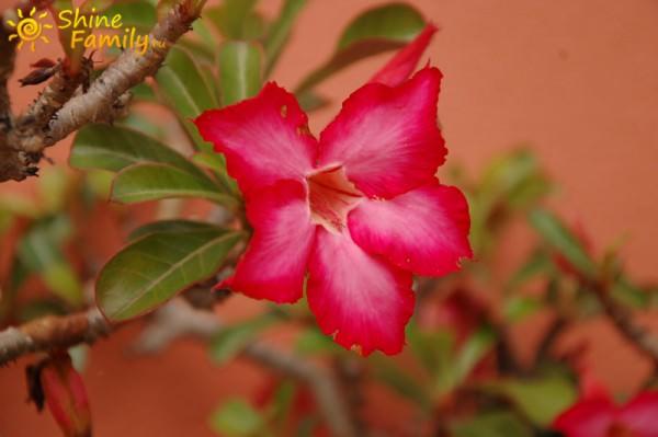 Цветы возле дома