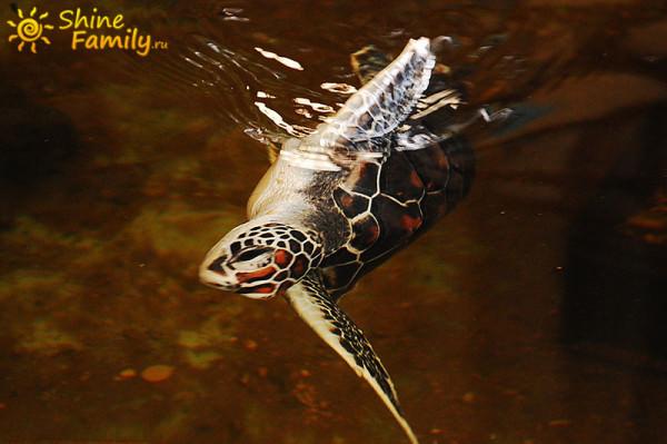 а вот и сама черепаха