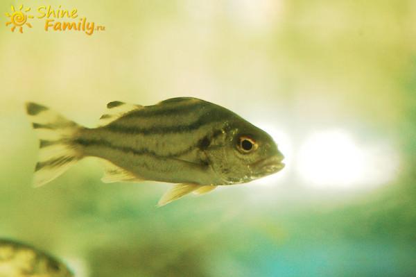 fish_023