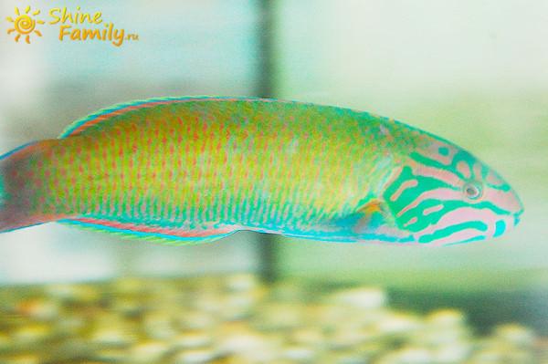 fish_026