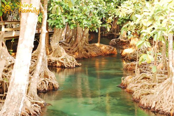 the_mangroves_005