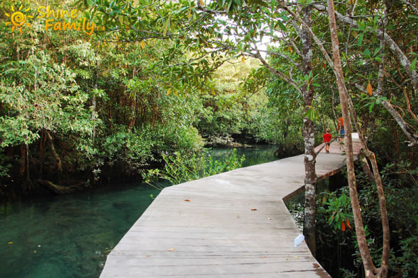 деревянная дорога через мангры