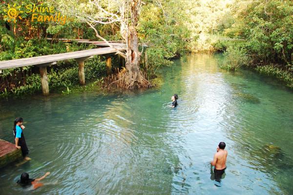 the_mangroves_008