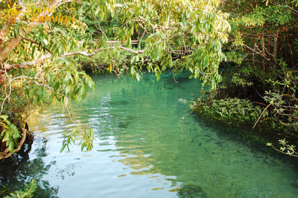 the_mangroves_009