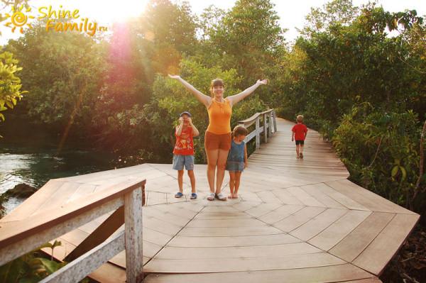 the_mangroves_013