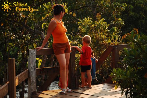 the_mangroves_014