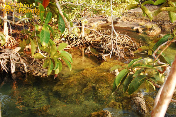 the_mangroves_015