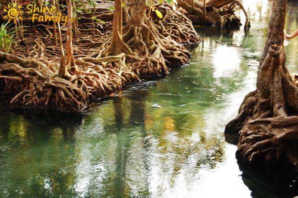 the_mangroves_017