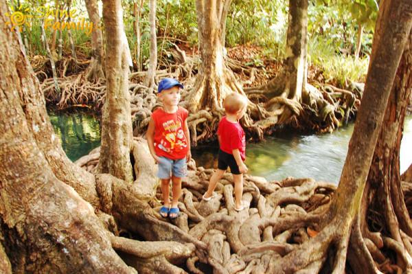 the_mangroves_020