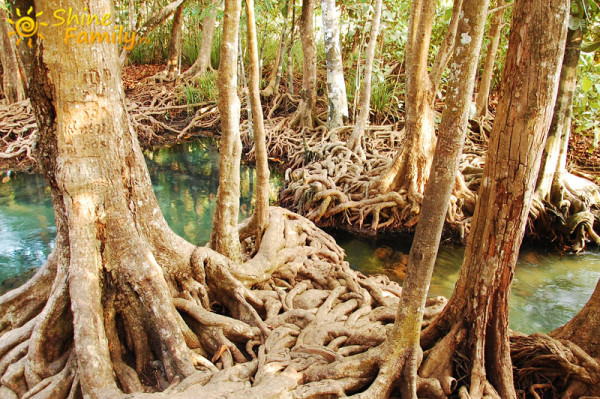 the_mangroves_021