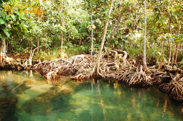 the_mangroves_022
