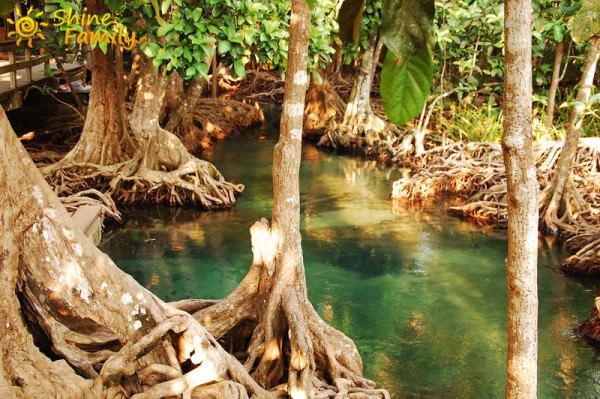 the_mangroves_024
