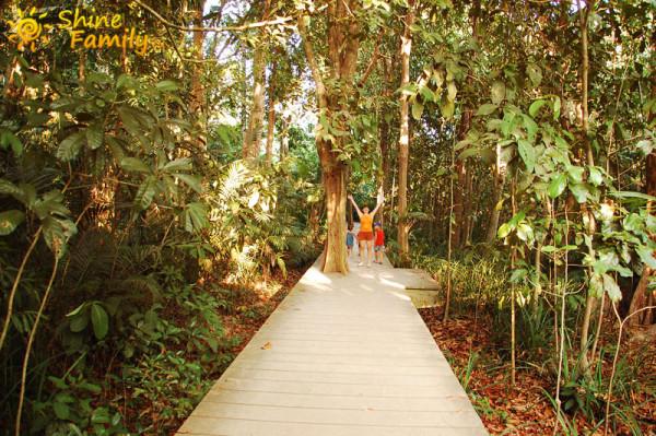 the_mangroves_025
