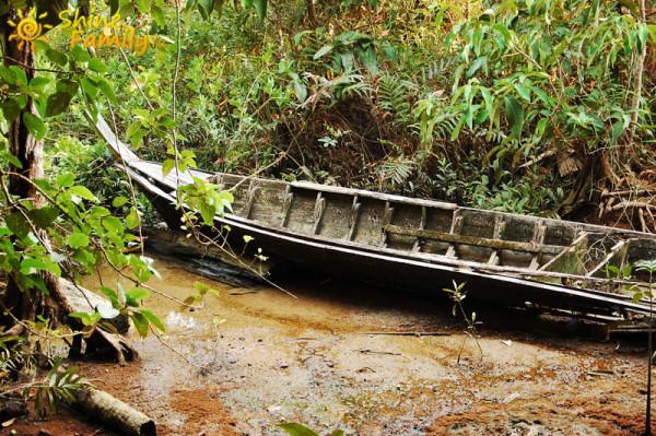 the_mangroves_027