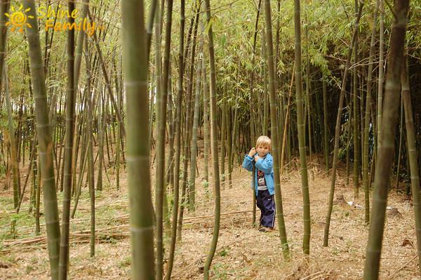 Yuyuan_Garden_048